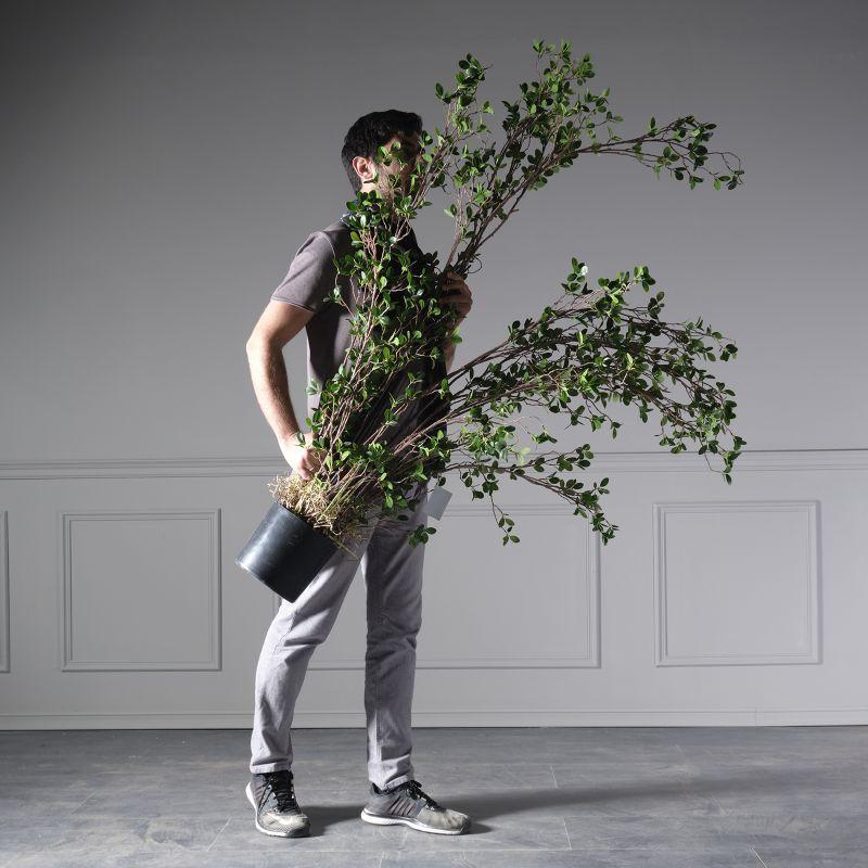 Τεχνητό Δέντρο Καουτσούκ 183 εκ.