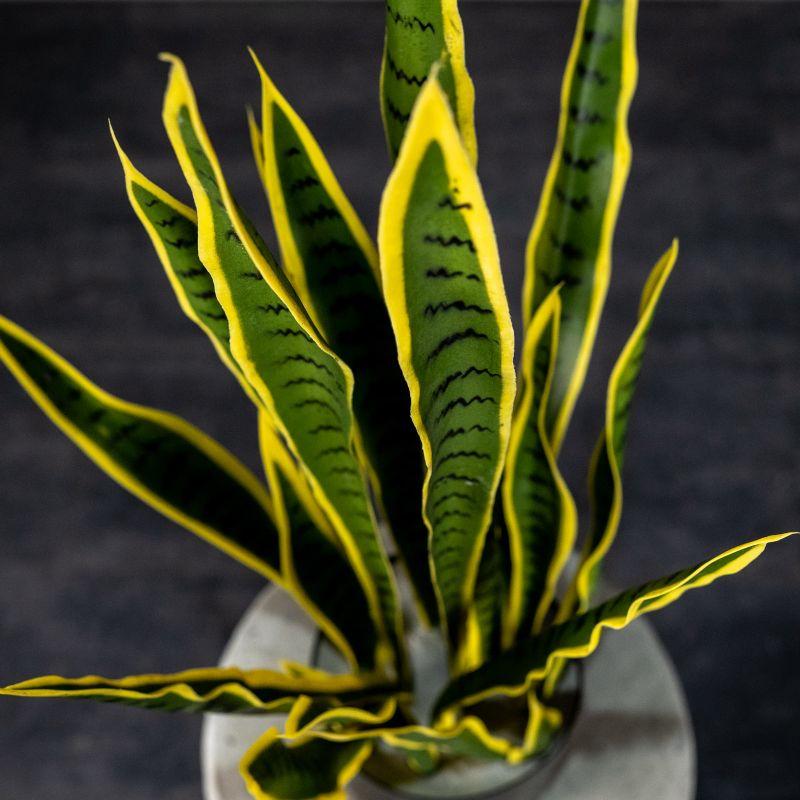 Τεχνητό Φυτό Σανσεβιέρα 45 εκ.