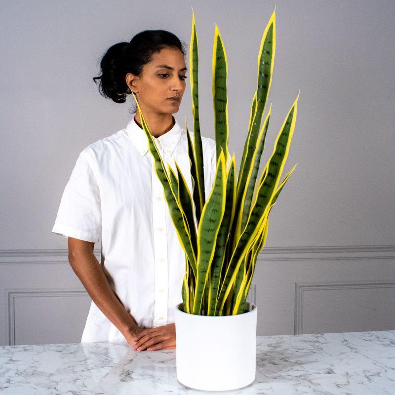 Τεχνητό Φυτό Σανσεβιέρα 80 εκ.