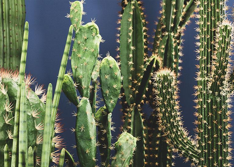 artificialcactus